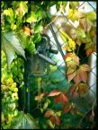 """love_ridden """"Tajemniczy Ogród"""" (2011-11-11 14:59:06) komentarzy: 4, ostatni: niech żyje velvia! :))"""
