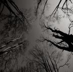 """asiasido """"Aleja klonowa"""" (2011-11-13 00:11:40) komentarzy: 6, ostatni: ...złowrogo patrzą z góry....wciągające i budujące klimat niepokoju, p-m :)"""