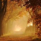 """Tadek Piotrowski """"Tańczący na wietrze"""" (2011-11-14 19:27:18) komentarzy: 54, ostatni: pięknie tu u Ciebie magicznie"""