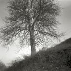 """irmi """""""" (2011-11-19 18:16:24) komentarzy: 1, ostatni: Lubie bezlistne drzewa, ale szkoda, ze sie cale nie zalapalo..."""
