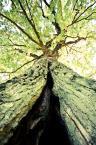 """Maskotka """"Bajka o drzewie"""" (2011-11-19 19:43:24) komentarzy: 7, ostatni: oj tam oj tam"""