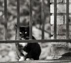 """macieknowak """"Przezorny ubezpieczony"""" (2011-11-21 23:13:46) komentarzy: 5, ostatni: Wszystkie koty są fajne; lubię je za to, że mają swoje zdanie, że nie biegają za patykami, że my jesteśmy dla nich, a nie one dla nas :)"""