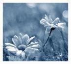 """Maxmaks """""""" (2011-11-22 19:40:22) komentarzy: 13, ostatni: piękne"""