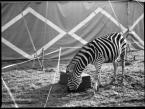 """love_ridden """"The White Stripes"""" (2011-12-01 10:48:57) komentarzy: 7, ostatni: :)"""
