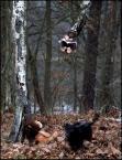 """jolka630 """"Co w lesie przytrafić się może"""" (2011-12-03 17:20:50) komentarzy: 13, ostatni: looo > zawsze dobrze wśród sprawdzonych przyjaciół :-)"""