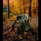 """amator_sliwek """"Pniaczek - kolorowy żywot staruszka"""" (2011-12-03 21:47:00) komentarzy: 6, ostatni: piękna jesień"""