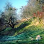 """ennio """""""" (2011-12-05 21:06:54) komentarzy: 3, ostatni: pzdr ;-)"""