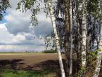 """opty49 """""""" (2011-12-08 23:20:30) komentarzy: 15, ostatni: brzozy to  moje ulubione drzewa :-)"""