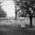 """CzesławW """"a w sadzie..."""" (2011-12-27 18:09:19) komentarzy: 5, ostatni: :)"""
