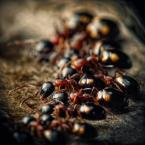 """BigBadWolf """"serengeti"""" (2012-01-03 18:51:49) komentarzy: 1, ostatni: ... pięknie ..."""