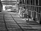 """wizental """"klatka z cieni"""" (2012-01-08 18:21:28) komentarzy: 2, ostatni: przyjemna tonacja i ciekawy kadr"""