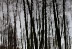 "BALTORO ""śnił się lasom las ..."" (2012-01-12 16:48:19) komentarzy: 0, ostatni:"
