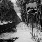"""Zeny """"z cyklu w lesie"""" (2012-01-19 08:53:54) komentarzy: 35, ostatni: ciekawie... :)"""
