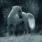 """Ronceval """""""" (2012-02-03 17:36:35) komentarzy: 13, ostatni: Tylko podziwiać..."""