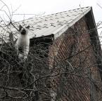 """poganka """"łowy"""" (2012-02-17 19:27:03) komentarzy: 40, ostatni: To kot na ptaki, żadnemu nie przepusci :)"""
