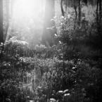 """rysiek57 """""""" (2012-02-18 21:18:38) komentarzy: 13, ostatni: Tu też światło znakomite"""