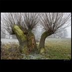 """ramumajana """"nie płaczcie... wierzby..."""" (2012-02-19 12:54:15) komentarzy: 5, ostatni: też lubię wierzby"""