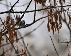 """tryksa """"\\""""zorro\\"""""""" (2012-02-19 15:56:06) komentarzy: 1, ostatni: Byle jaka fotka ptaka :-)"""