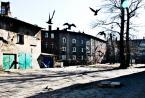 """ania wiech """"odlot"""" (2012-03-04 22:51:23) komentarzy: 3, ostatni: te ptaki... super zlapalas."""