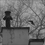 """ramumajana """"lądowanie"""" (2012-03-19 09:03:55) komentarzy: 1, ostatni: Całkiem ciekawy obraz..."""