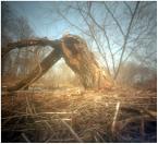 """invention """"* ( rejony odwilży )"""" (2012-03-21 11:56:10) komentarzy: 3, ostatni: malowniczy połamaniec"""