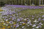 """Adam Skotarczak """"Wiosna, wiosna... ach to Ty"""" (2012-03-22 20:55:04) komentarzy: 3, ostatni: Cudna wiosenka :)"""