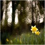 """Tarantella """""""" (2012-03-25 22:27:16) komentarzy: 2, ostatni: Piękna trójwymiarowość"""