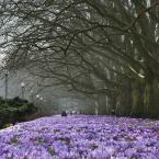 """Kazkar """"wiosna w mieście"""" (2012-03-28 19:04:48) komentarzy: 26, ostatni: bez szczecińskich krokusów nie byłoby wiosny..:)))"""