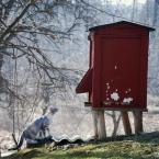 """daguerrotype """""""" (2012-03-28 19:48:58) komentarzy: 7, ostatni: czyżby amatorka miodu ?????? =^..^="""