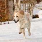 """maniekg """"cd."""" (2012-03-31 20:22:15) komentarzy: 8, ostatni: Fajny pies!"""