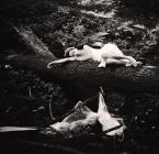 "fotoren ""Melancholia...."" (2012-03-31 21:37:31) komentarzy: 2, ostatni: fajne"