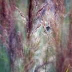 """daniel8 """"."""" (2012-04-02 21:24:34) komentarzy: 9, ostatni: Tyle traw, a on nie ukrył się :)"""