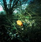 """irmi """""""" (2012-04-04 09:10:05) komentarzy: 1, ostatni: ... czyżby ktoś oliwił gałęzie ... ;-)) pzdr !!!"""