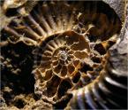 """barszczon """"podróż do wnętrza czasu..."""" (2012-04-12 11:27:21) komentarzy: 8, ostatni: @Enoo :)) wszelkie """"ślimaki"""" teraz w modzie :))"""