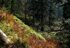 """hobo13 """"darzbór"""" (2012-04-13 19:53:33) komentarzy: 3, ostatni: Bardzo płaskie to zdjęcie jest.. jakoś zupełnie zatraciła się głębia leśnej przestrzeni.."""