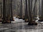 """sandiego """"w lesie..."""" (2012-04-14 19:06:23) komentarzy: 13, ostatni: elegancko ....!"""