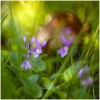 """Tarantella """""""" (2012-04-16 19:30:40) komentarzy: 7, ostatni: Fragment wiosennego gobelinu"""