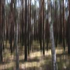 "j2p ""brzozowo.. sosnowo.."" (2012-04-23 13:28:42) komentarzy: 3, ostatni: ...malarskie ... urokliwe..."
