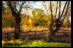"""L_S """"*"""" (2012-04-25 21:32:59) komentarzy: 8, ostatni: pieknie swiatlem malowane"""