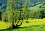 """hobo13 """"wiosenne wesołości"""" (2012-04-29 10:58:59) komentarzy: 0, ostatni:"""