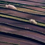 """cocacola """"skosny wzorek"""" (2012-05-06 19:11:41) komentarzy: 65, ostatni: Ładny, polny wzorek"""
