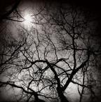 """zippuro """"neurotyczna abstrakcja"""" (2012-05-08 21:56:27) komentarzy: 8, ostatni: no proszę, jak pięknie chronią nasze białe twarze przed słonecznymi promieniami ... :-)"""