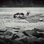 """Paddinka """""""" (2012-05-09 14:47:30) komentarzy: 5, ostatni: !!!!"""