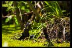 "L_S ""Pancerna żaba"" (2012-05-20 21:01:44) komentarzy: 7, ostatni: +++++ :)"
