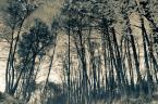 """andzej n. """"Wodne drzewa"""" (2012-05-31 00:34:02) komentarzy: 0, ostatni:"""