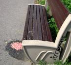 """Peiter """"Paw Kibica"""" (2012-06-10 14:26:45) komentarzy: 14, ostatni: ...prowokacja...ostatnio modne słowo..."""