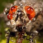 """piotreknik """"Fly"""" (2012-06-13 12:26:59) komentarzy: 6, ostatni: Swietne makro"""