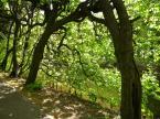 """baha7 """"w Parku Oliwskim"""" (2012-07-22 18:37:21) komentarzy: 1, ostatni: ganic nie bede...zachecam do dalszych cwiczen..."""