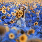 """BigBadWolf """"taka sobie niedziela"""" (2012-08-03 20:28:39) komentarzy: 27, ostatni: ciekawy sposób widzenia"""