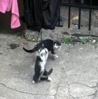 """detective """"Opowieści ze śląskiego podwórka, cz.x. """"Karate Kitty"""""""" (2012-08-22 19:53:24) komentarzy: 9, ostatni: ...;))"""